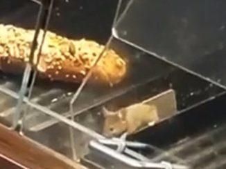 Ausschnitt Video Maus in Supermarkt