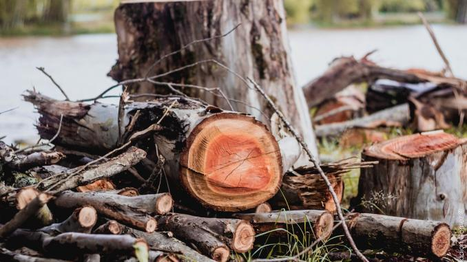 Symbolbild: Holz